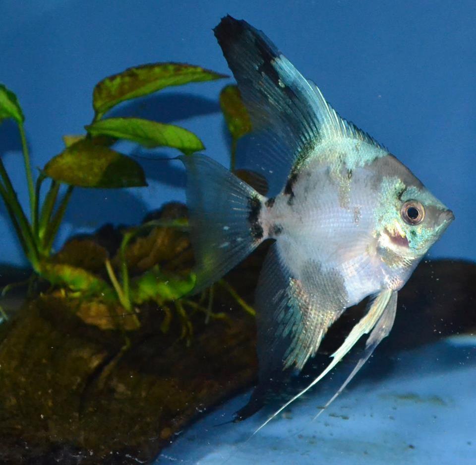 Pin On Fish Tanks Freshwater