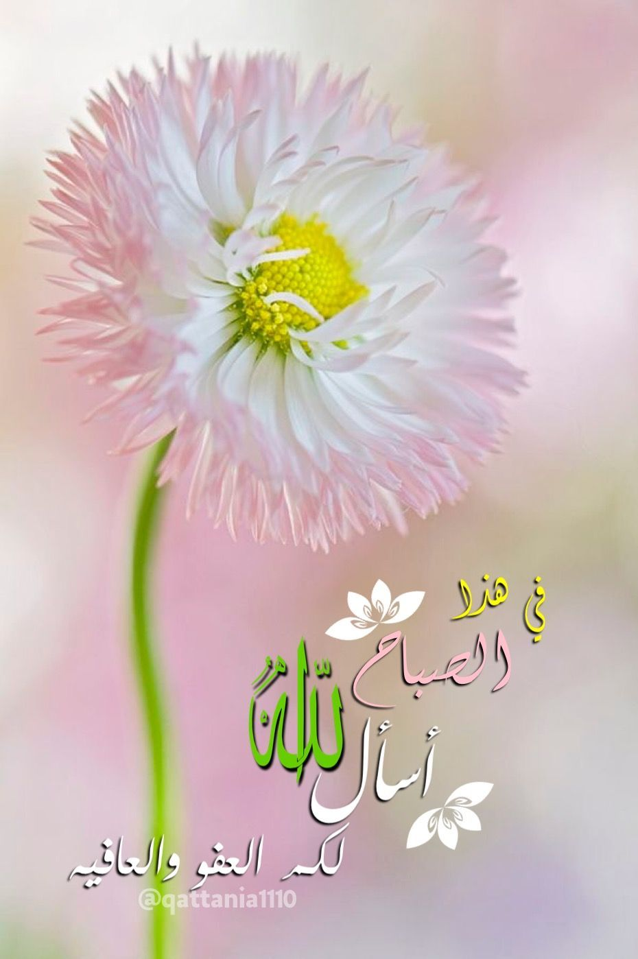 Pin By Ali علي On صباح الخير Good Morning Good Morning Greetings Morning Greeting Good Night Messages