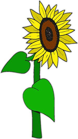 Photo of sunflowers clipart black and white