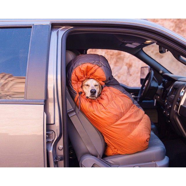 Sleeping bag puppy