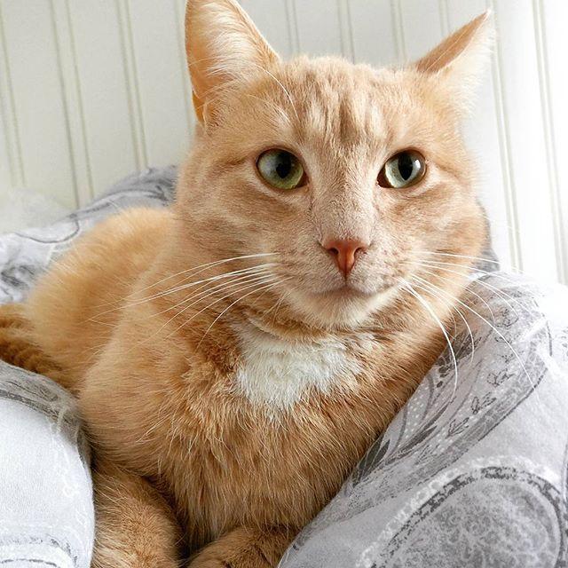 WEBSTA @ superstar_cats - Happy weekend ❤️❤️ #cat #instacat #friday #weekend #mycat🐱