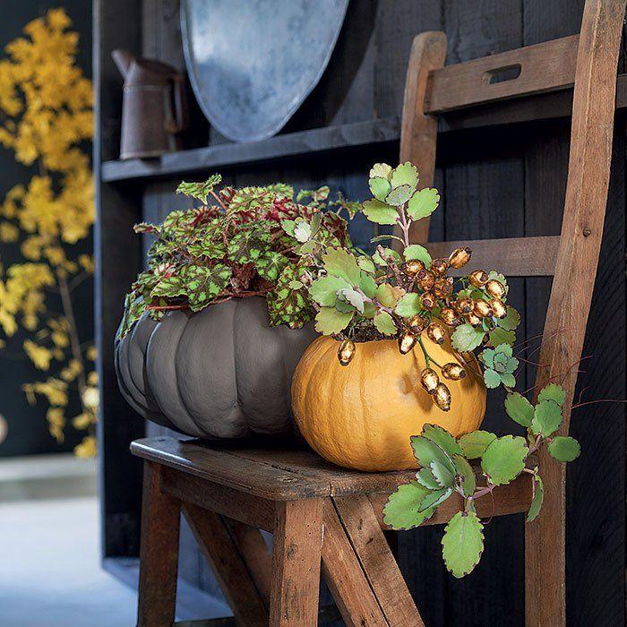 des plantes install es dans des potirons plantes le cache et le potiron. Black Bedroom Furniture Sets. Home Design Ideas