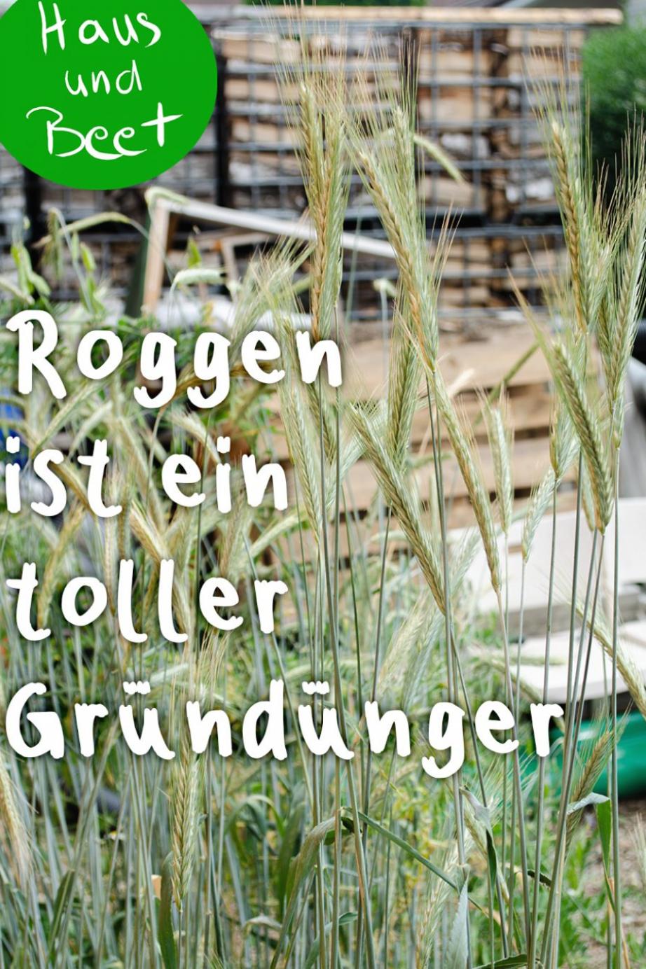 Gr Nd Nger Gr Nd Ngerpflanzen Biologische D Ngung Zwischenfrucht Gelber Senf Sonnenblumen Bu Tomato Fertilizer Natural Fertilizer Organic Fertilizer