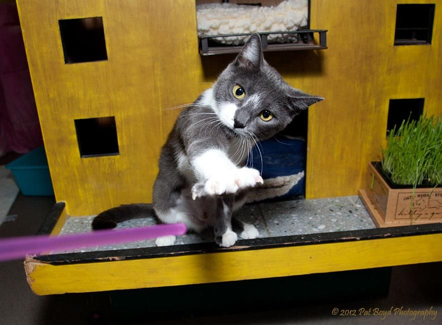 """""""Taylor"""" has been adopted! Adoption, Animal shelter"""