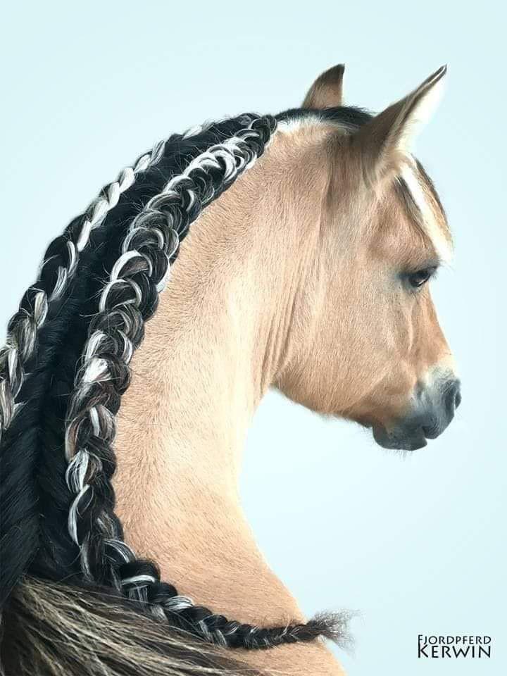 malvorlage pferd mit geflochtener mähne