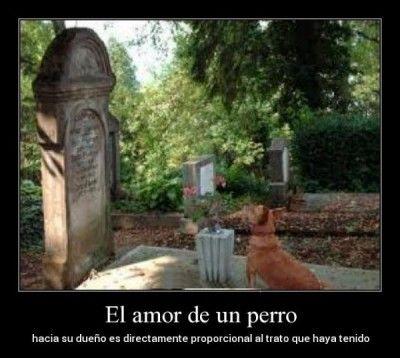 Pero Mirate Estas Imagenes De Humor Papa Funny Animal Memes Animal Memes Funny Spanish Memes