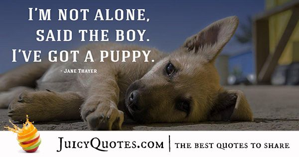 Quotes About Dogs 9 Cute Dog Quotes Pinterest Dog Quotes