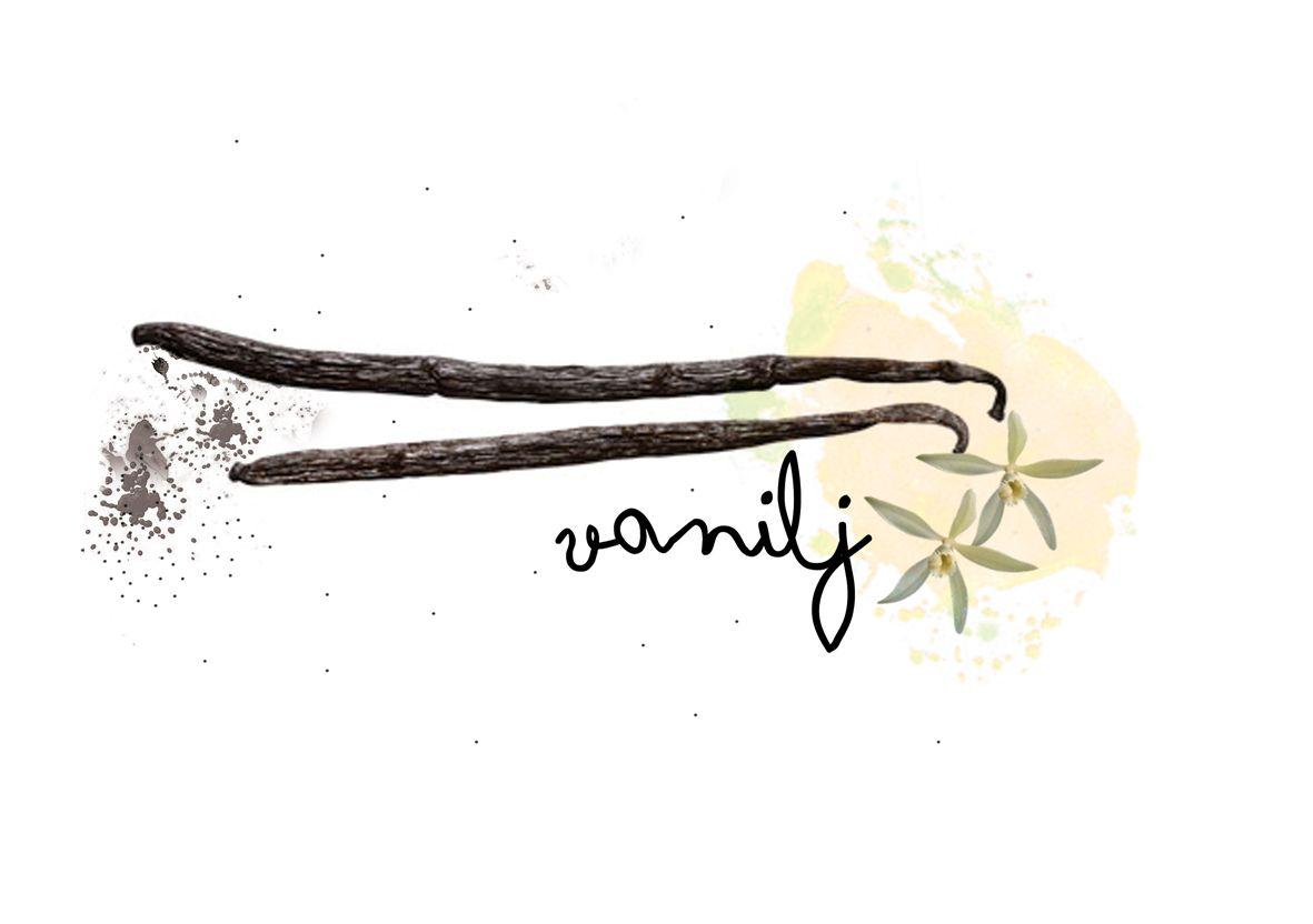 Sarah Otley: Vanilj: Ingredient Drawing for Cupcake STHLM