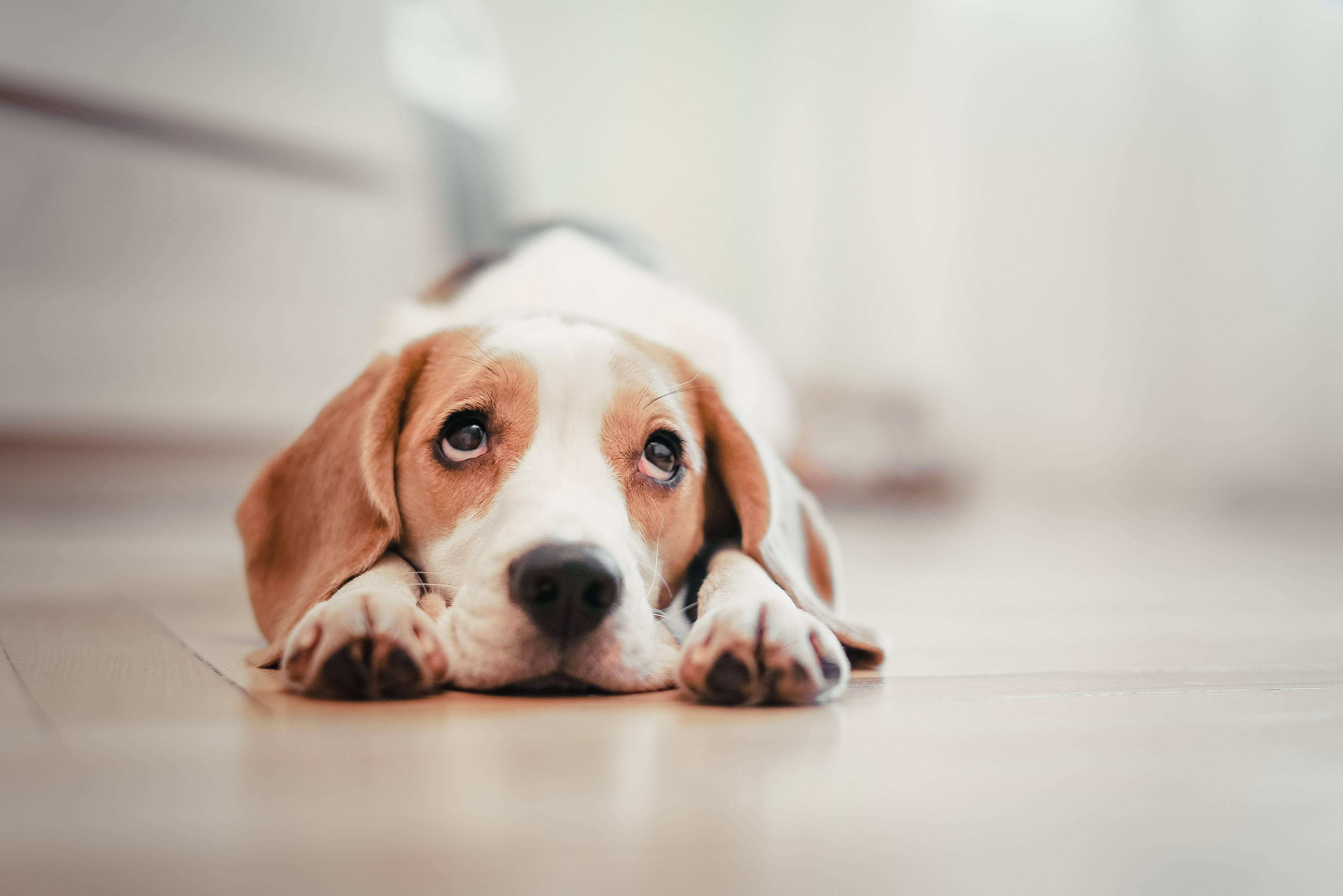 Vuoi Prendere Un Cane Ecco Alcuni Motivi Per Cui Forse Non E Il