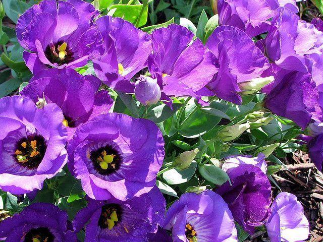 Free Plant Identification Annual Plants Plants Annual Flowers