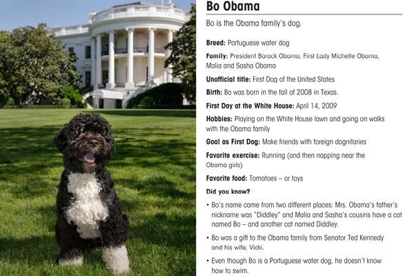 Bo S Stats Bo Obama Portuguese Water Dog Dogs