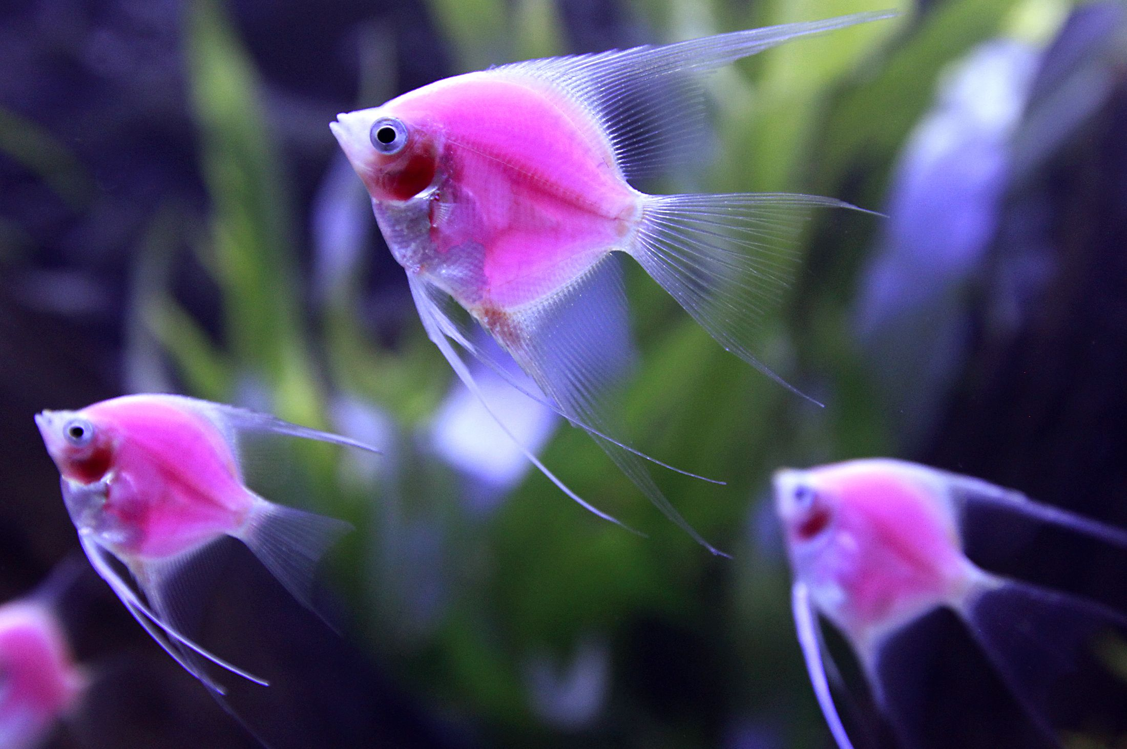 How to Pick and Care for Pet Fish | WishForPets | pet | Pinterest ...