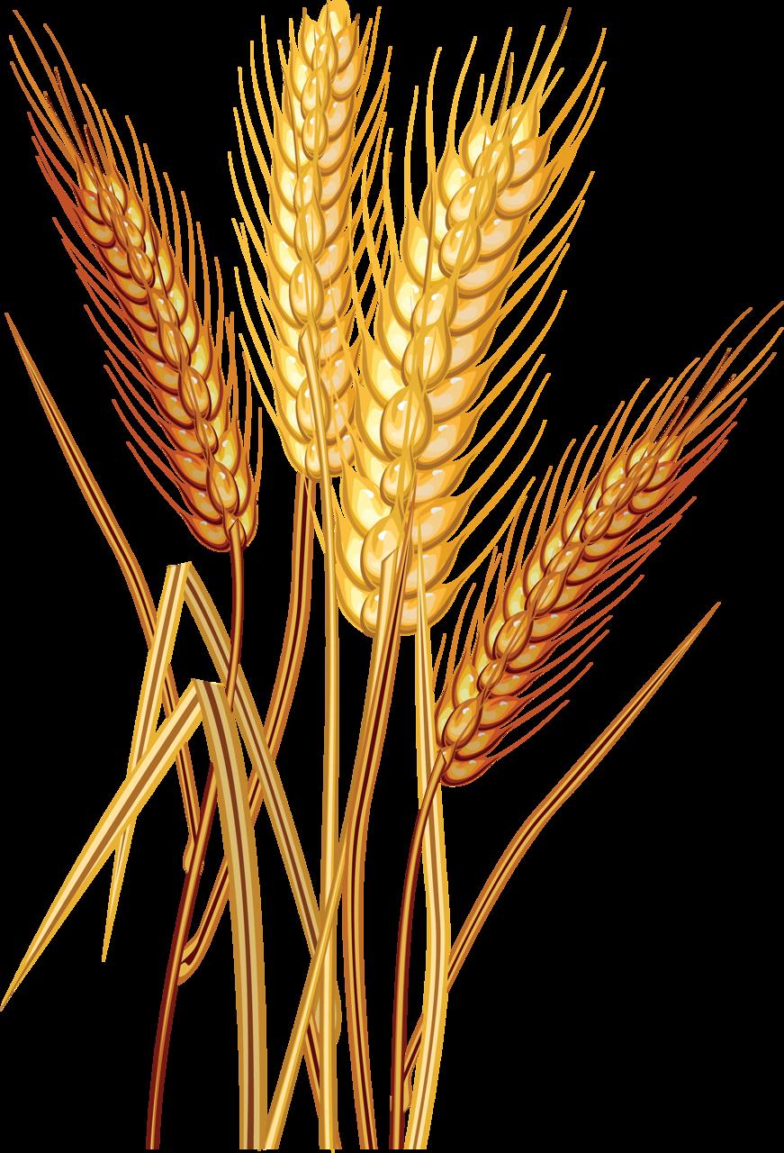 Пшеница картинки нарисованные, прикольными поздравлениями новым