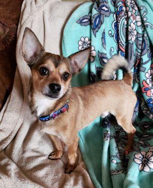 Dogs for Adoption Near West Branch, MI Petfinder Dog