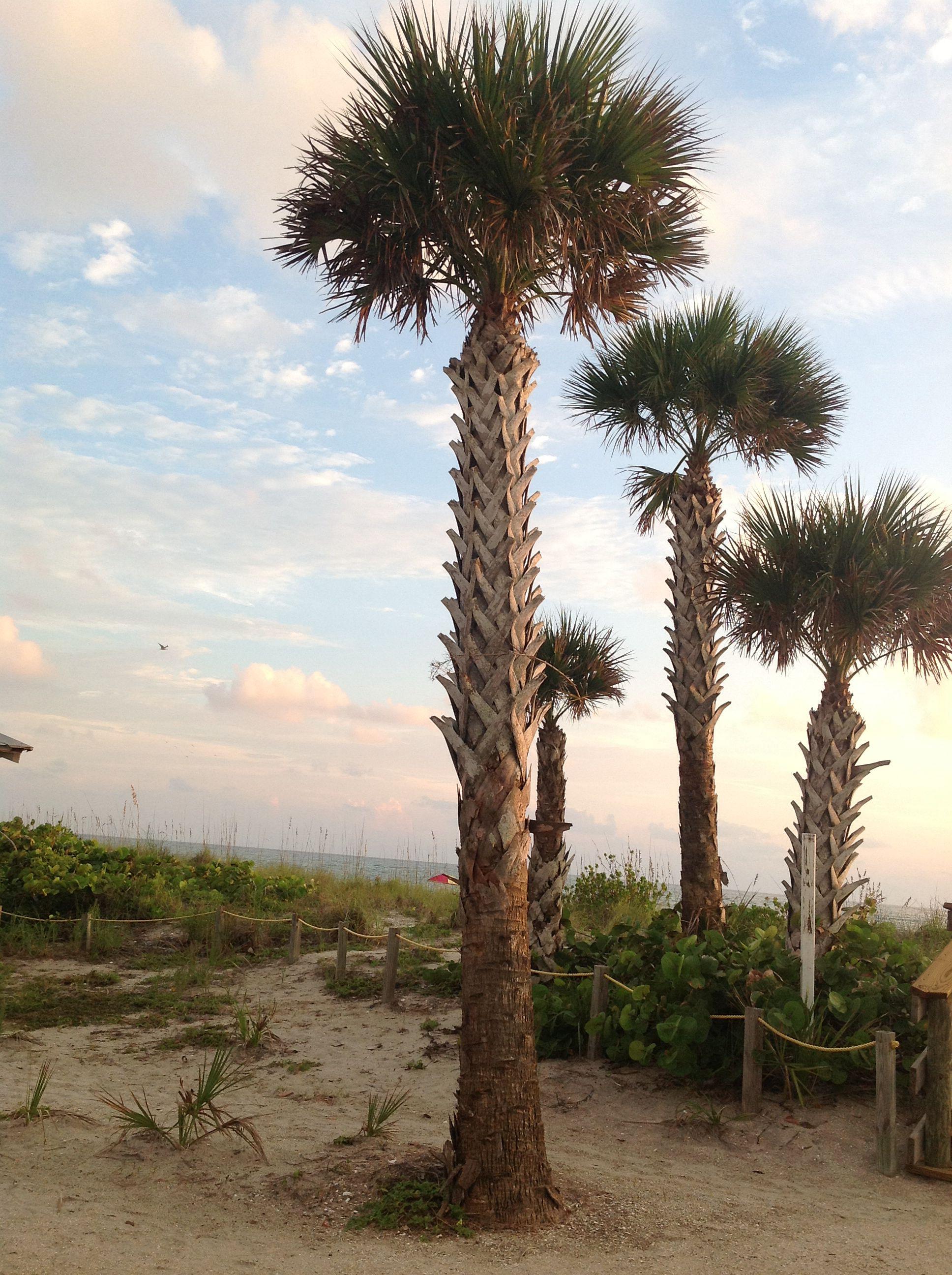 Manasota Key | Florida attractions, Manasota key florida ...