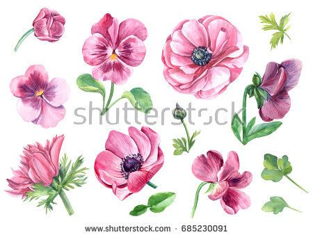 Set Of Pansy And Anemones Flowers Watercolor Painting Pink Watercolor Flower Watercolor Tattoo Flower Flower Art