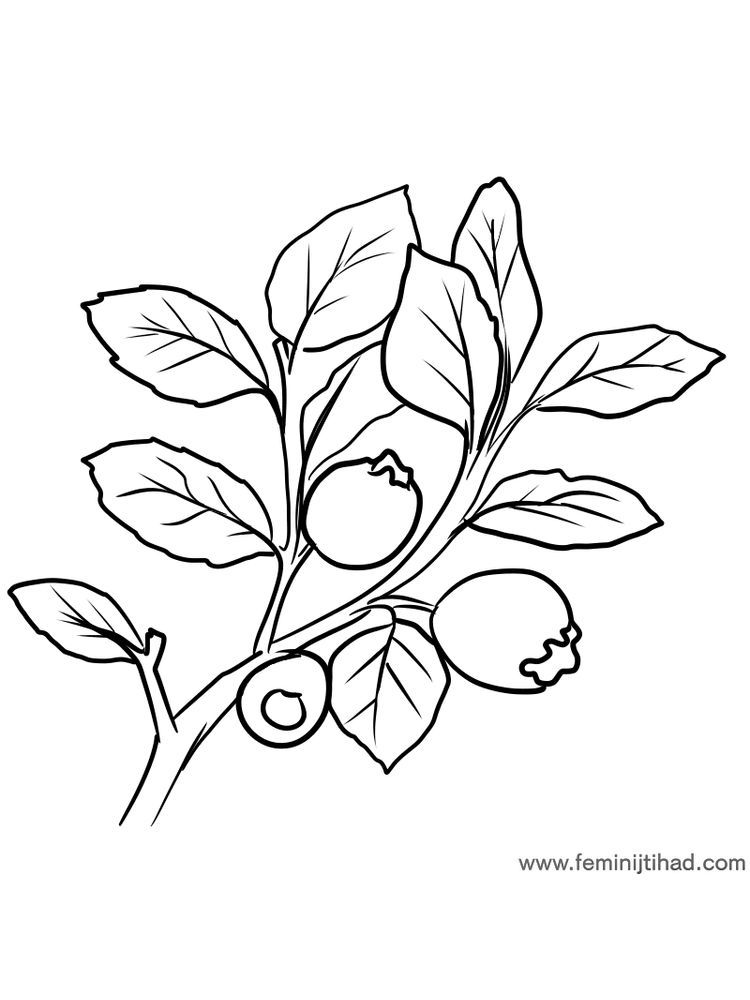 Free Bilberry Coloring Page Print