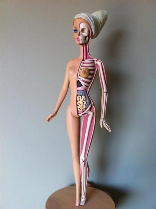Barbie Anatomy Hand Sculpted Anatomical Barbie Doll Jason Freeny