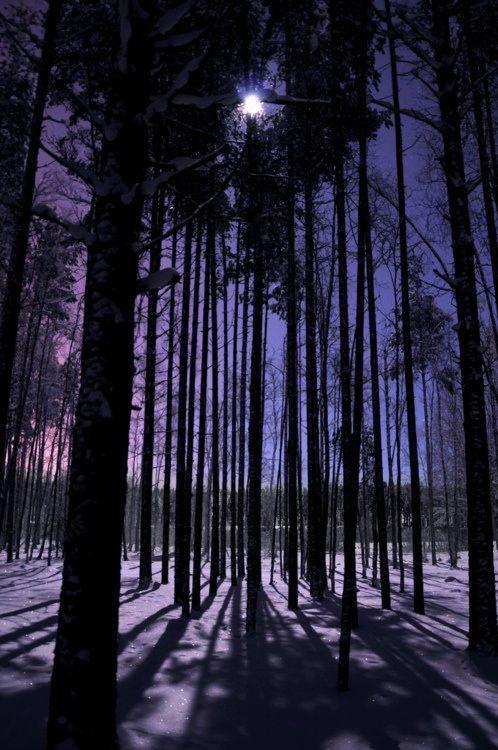 Winter Forest #snow #fashion #2014