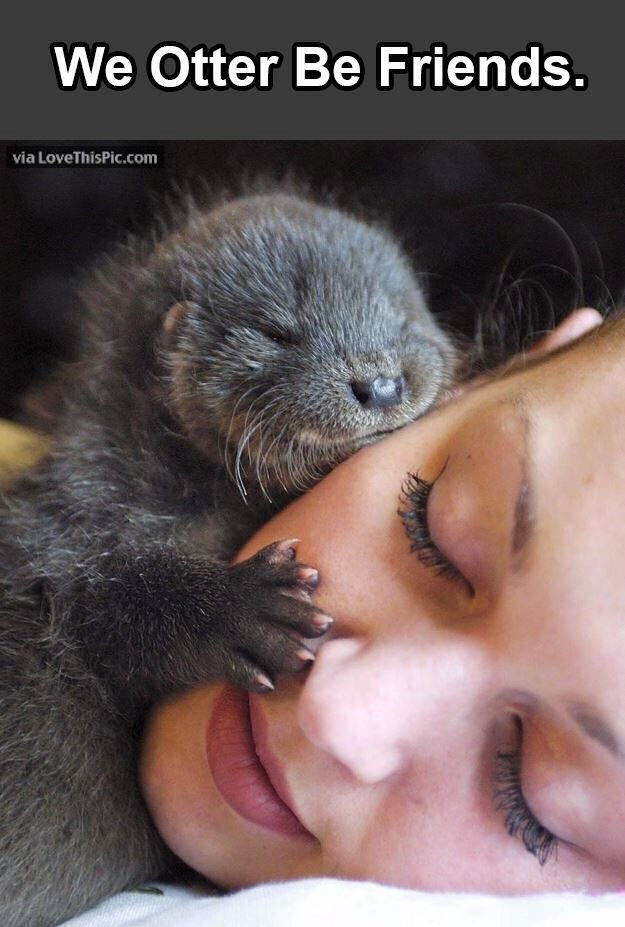 We Otter Be Friends