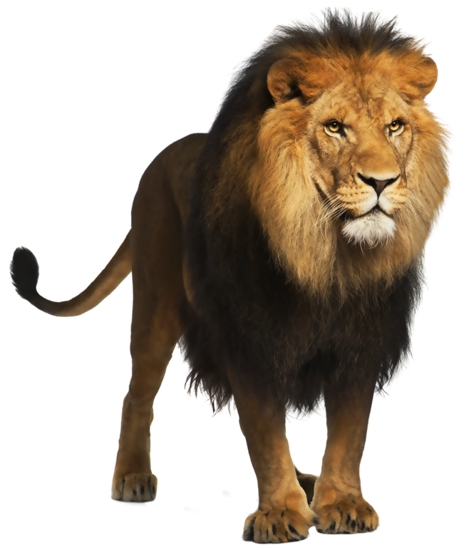 Lion PNG Picture Gallery Yopriceville HighQuality