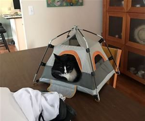 Kitty Has A Tent #cattentkitty & Kitty Has A Tent #cattentkitty | Cat Tent | Pinterest | Cat tent ...