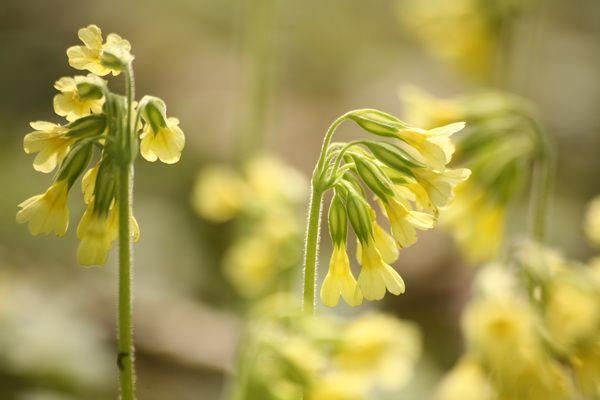 Unsere Natur im April: Hasenhochzeit, Bärlauchblüte, Igelerwachen, Kuckucks-Rückkehr | Kuriose Tierwelt