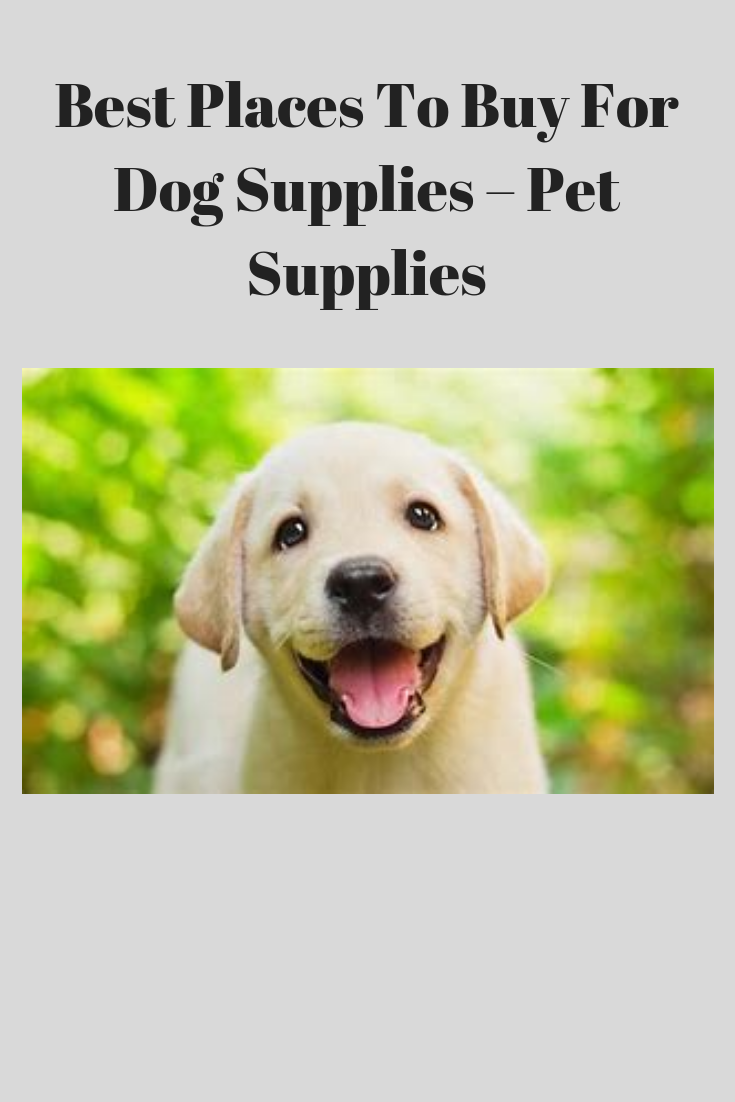 Best Places To Buy For Dog Supplies Pet Supplies Dog Supplies