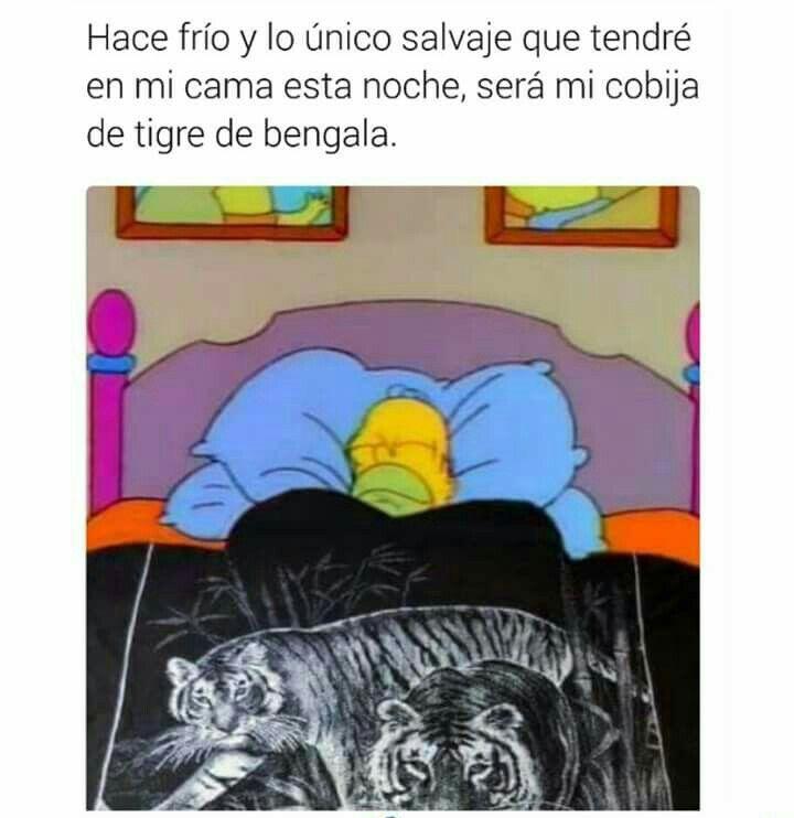 Lo Unico Salvaje En La Noche Memes Mexicanos Divertidos Memes Espanol Graciosos Chistes Mexicanos