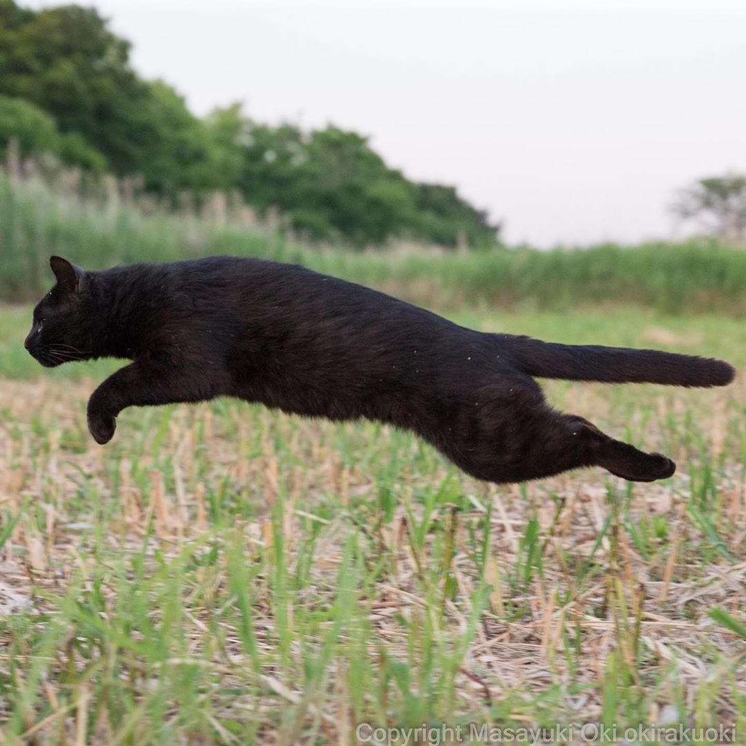 Masayuki Oki 猫写真家 にゃんこ相撲 絵本 On Instagram すいー