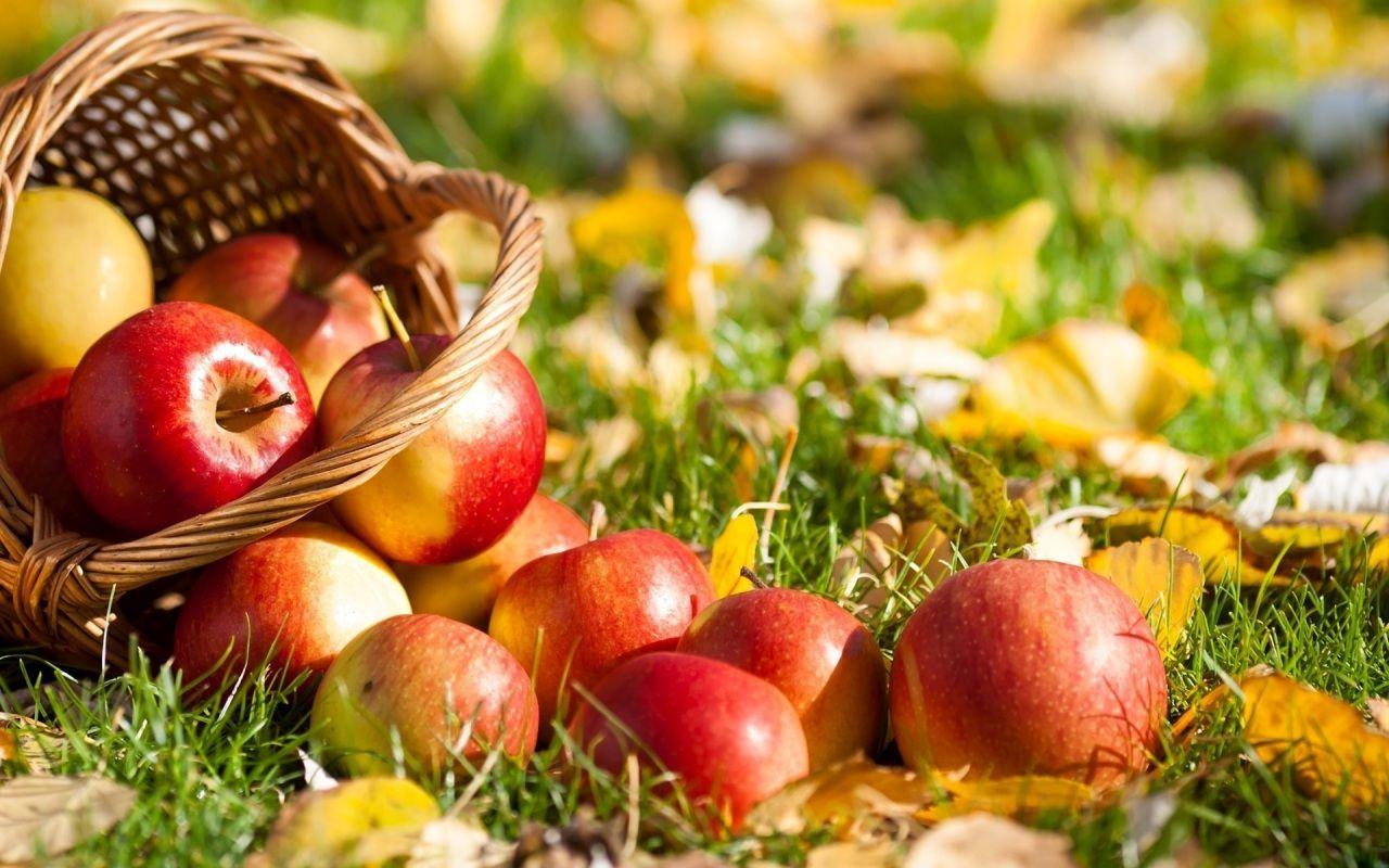 Pommes Automne Pomme Photos Nourriture