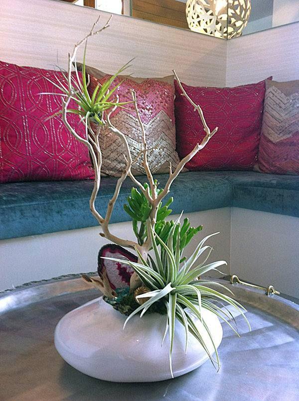 arrangement vase tillandsien wohnzimmer tisch pflanzen gew rze pflanzen gew rze pinterest. Black Bedroom Furniture Sets. Home Design Ideas