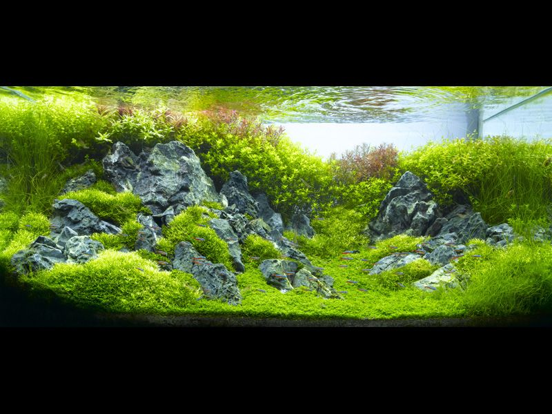 Beautiful planted aquarium by amano aquarium pinterest for Planted fish tank
