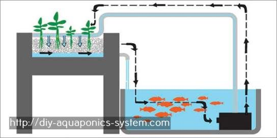 aquaponics grow bed aquaponics aquaponics, hydroponics