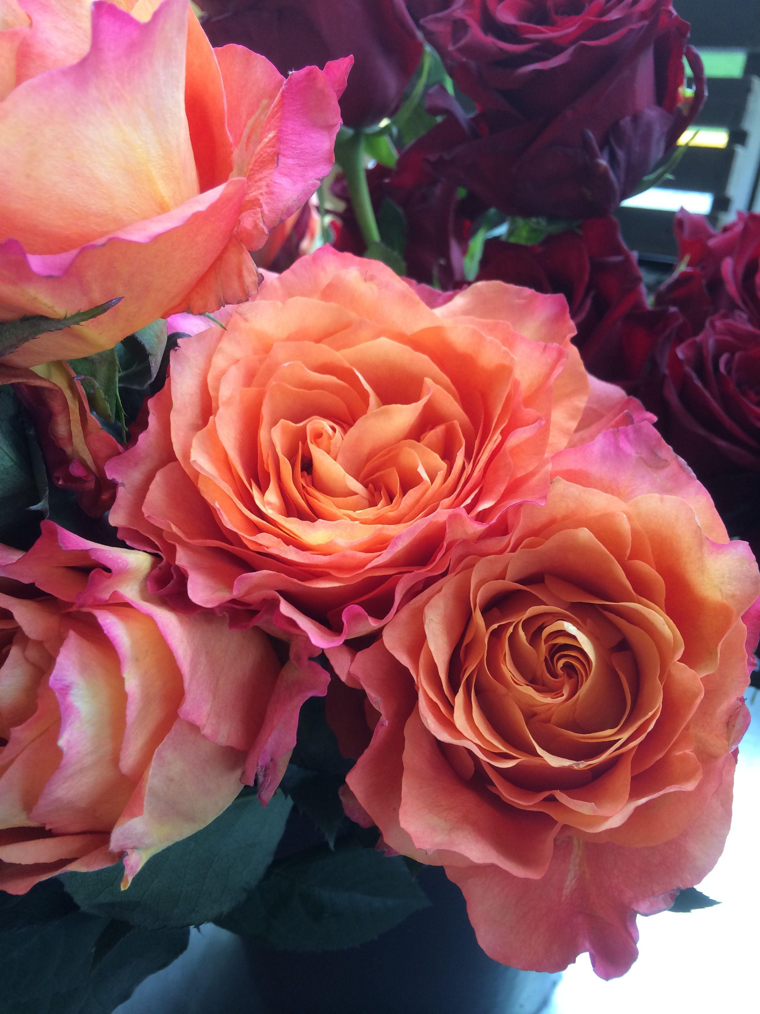 """Free Spirit"" Whole Trade Rose Flowers, Rose, Plants"
