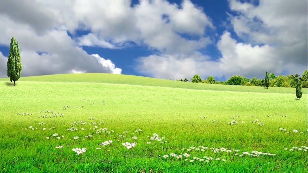 Beautiful Nature Nature Landscape Video Grass Field Background 1080p Background Sunday School Coloring Pages Beautiful Nature