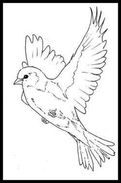 COLOUR IT SEW TRACE ETC Beautiful Birds Coloring Books