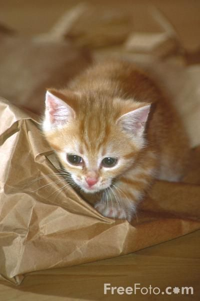 Ginger Kitty His Bag Kittens Orange Cats Cute Cats