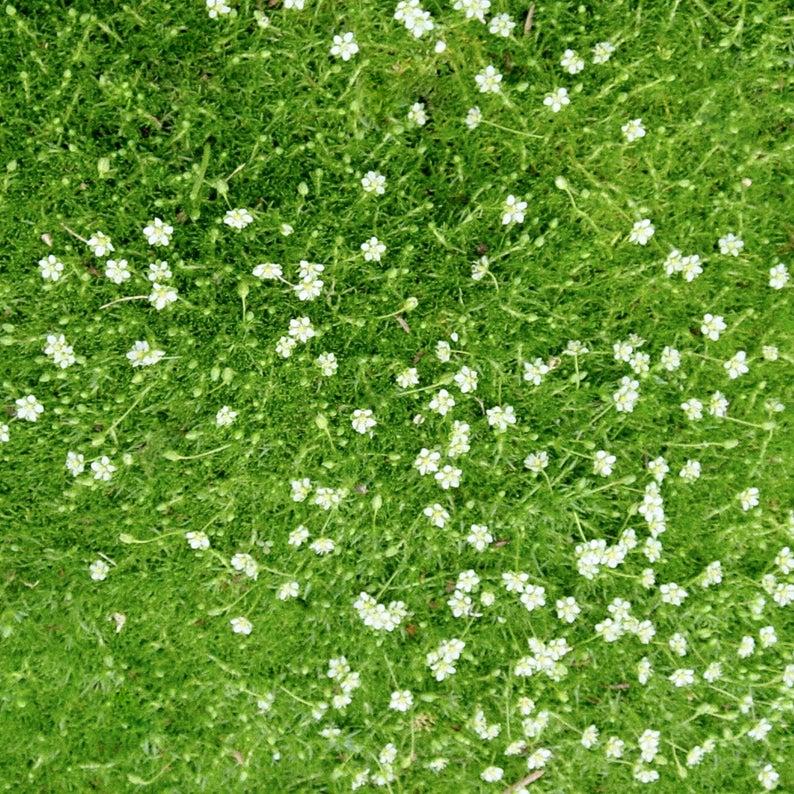 Thư Viện Cay Hoa Photoshop Grass Photoshop Photoshop Textures Architecture Collage