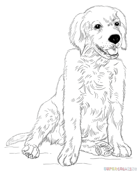 how to draw a golden retriever puppy step by step drawing