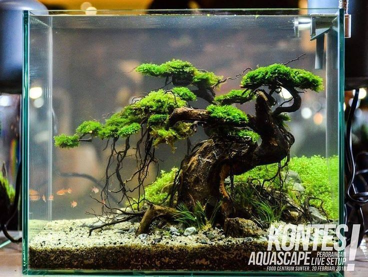 Awesome Bonsai Scape Aquascape Aquarium Aqua Aquascapi Aquascape Aquarium Aquarium Fish Aquarium Landscape