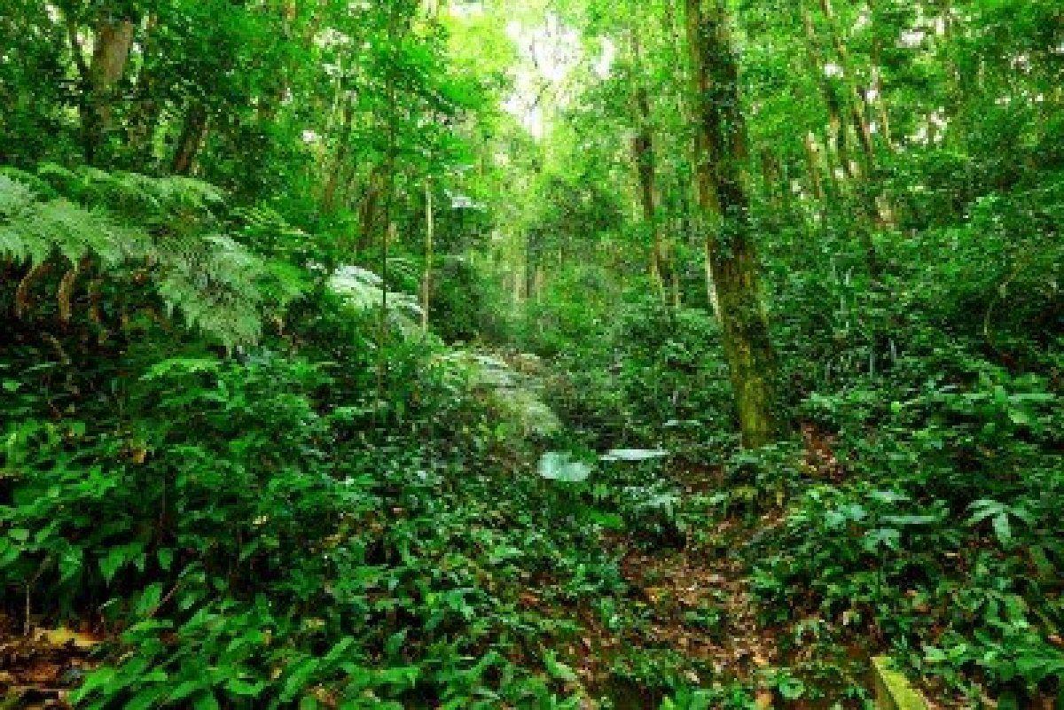 tropischer regenwald landschaft stockfoto 12985103. Black Bedroom Furniture Sets. Home Design Ideas