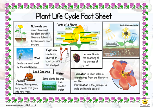 Plant Life Cycle Double Sided Fact Sheet  Sen Free Printables