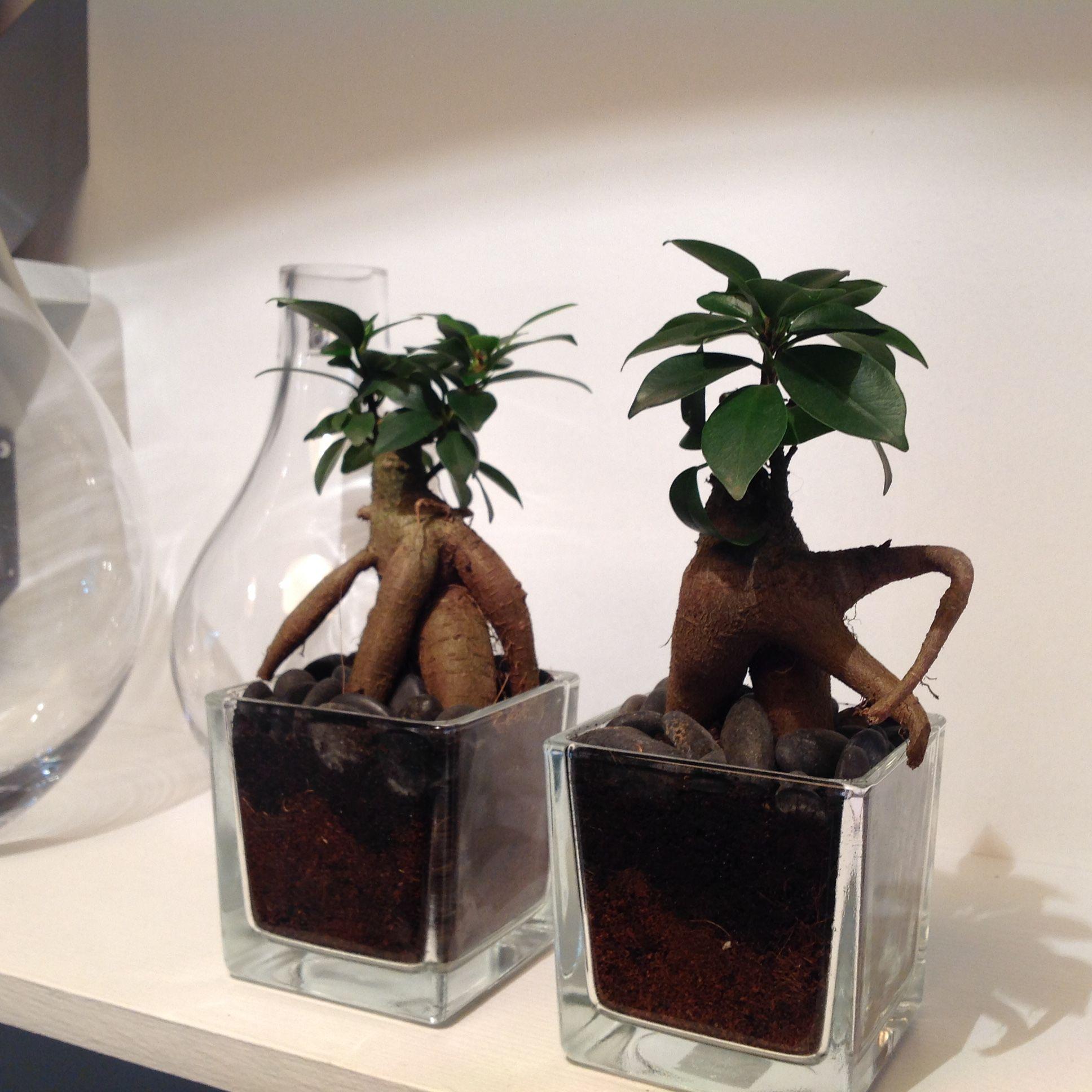 Plante fleurie ou verte, cactus, plante grasse, arbre fruitier nain, jardin miniature, ... Découvrez notre gamme de plantes en pot originale