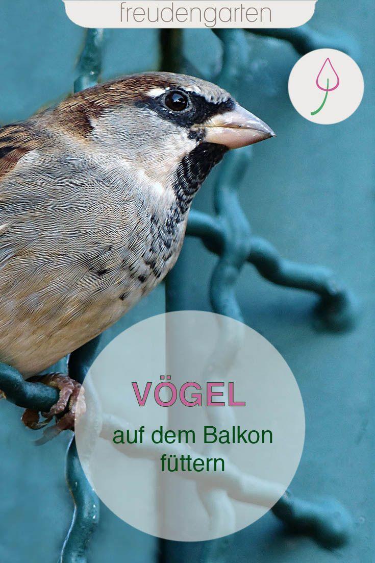 Vogel Auf Dem Balkon Futtern Vogel Im Garten Winterharte Stauden Balkon