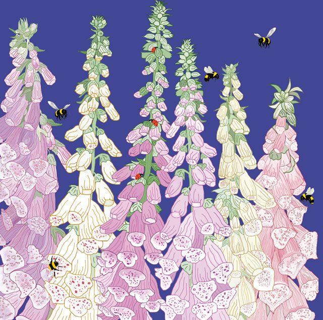 Foxgloves by graphic artist mig wyeth blank art cards by green blank art cards by green pebble m4hsunfo