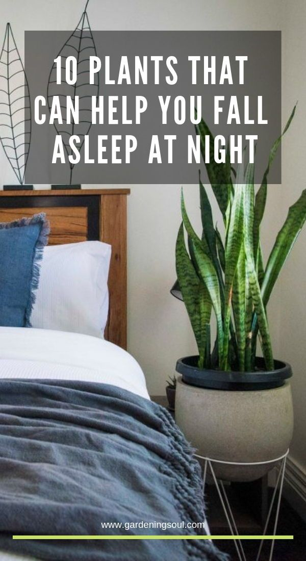 10 Plants That Can Help You Fall Asleep At Night Outdoor