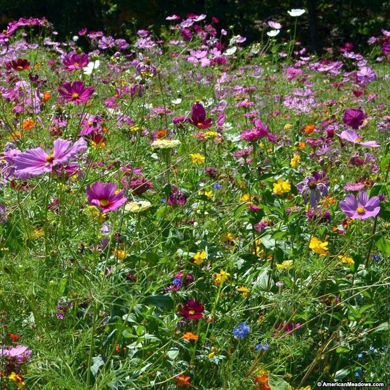 Butterfly Hummingbird Wildflower Seed Mix Hummingbird Wildflowers And Perennials