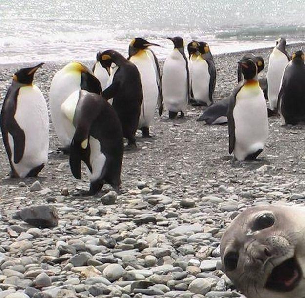 사진은 권력이다 :: 세상에서 가장 아름다운 동물 포토범버