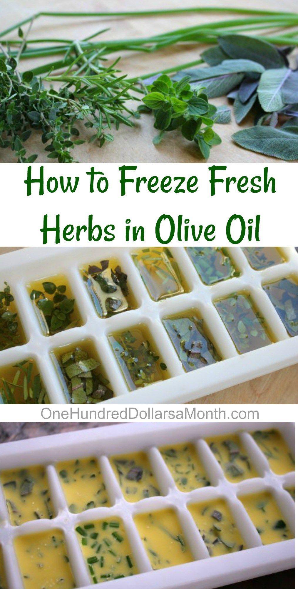 Freeze fresh herbs in olive oil freezing fresh herbs
